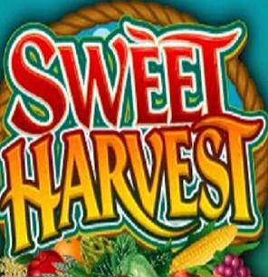 org_48442_Sweet-Harvest_3
