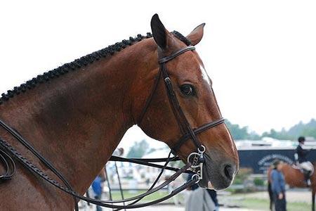 Casino Scam Saving Horses