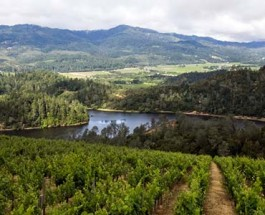 Californian Tribe Battles Vineyard Owner for Land Rights