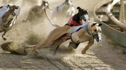Iowa Casinos Reach Agreement with Greyhound Racers