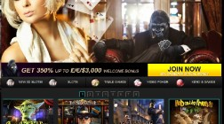 Gorilla Casino Goes Live with BetSoft Games