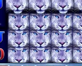 Snow Leopard Slots Features Wild Reels on Every Spin
