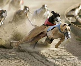 Telephone Betting on Horse and Dog Racing Coming to Arizona