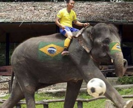 Thailand Holds Elephant World Cup as Part of Anti-Gambling Campaign