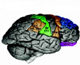 The Positive Effects of Poker on the Brain